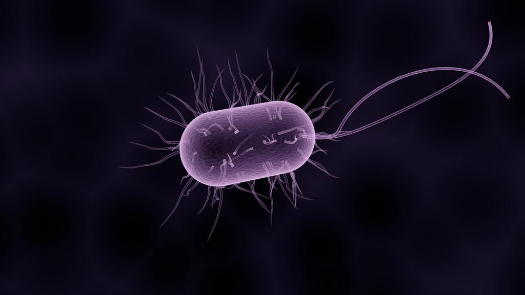 probióticos dentro del sistema digestivo